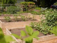 Raised garden beds 200x150 Food Growing, Organic Land Care, Home Construction, & Custom Landscapes
